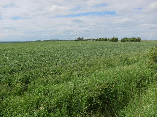 Farmland near New Farm