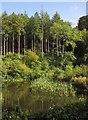 SX8462 : Pond near Berry Pomeroy Castle by Derek Harper