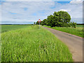 TL2255 : Minor road to Waresley by Hugh Venables