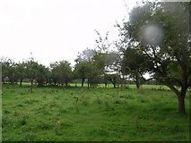 SO9335 : Old orchard near Home Farm, Kinsham by Liz Stone