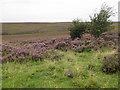 SE7192 : Spaunton Moor by Pauline E
