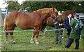 TM4997 : Heavy Horses by Roger Jones