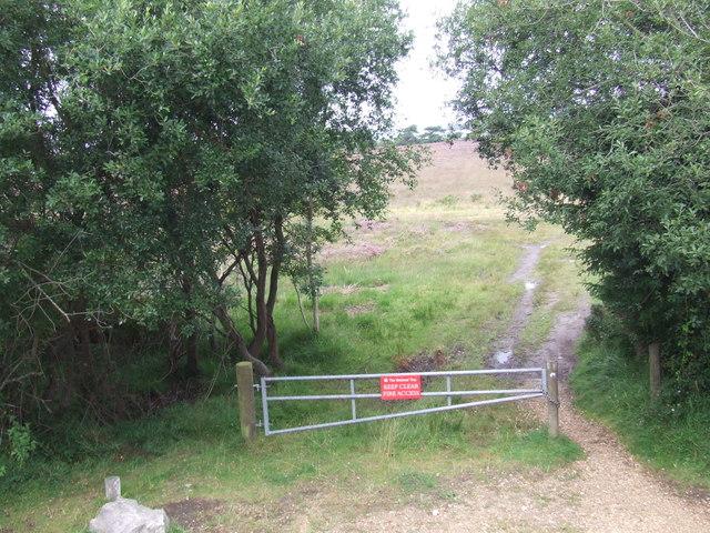 Track on Studland Heath