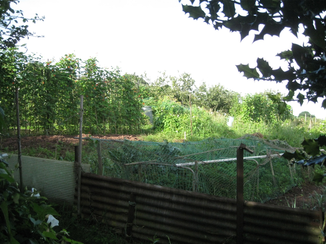 Homeyards allotments