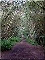 SK4483 : Trans Pennine Trail by Graham Hogg