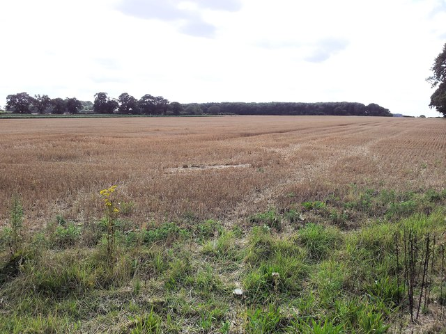 Looking over farmland towards Hales Grove