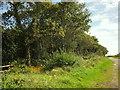SY2196 : Edge of Parehayne Hill by Derek Harper