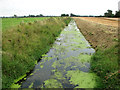 TF6312 : View along Polver Drain, Setchey by Evelyn Simak