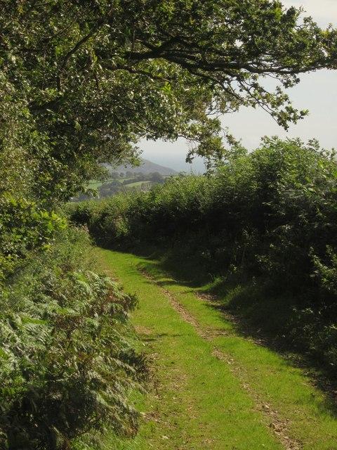 Downhayne Brake Road