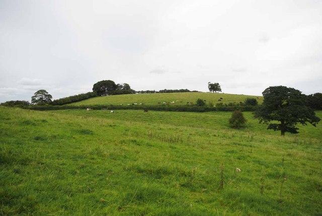 Pasture near Finney Green