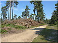 SU8967 : Forestry activity, Swinley park by Alan Hunt