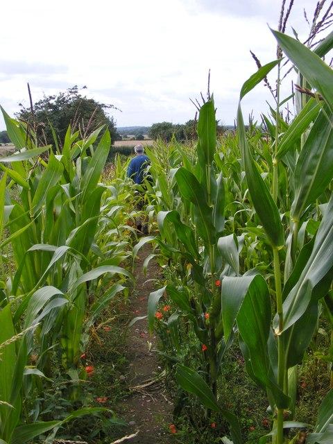 Shareshill Crop Path