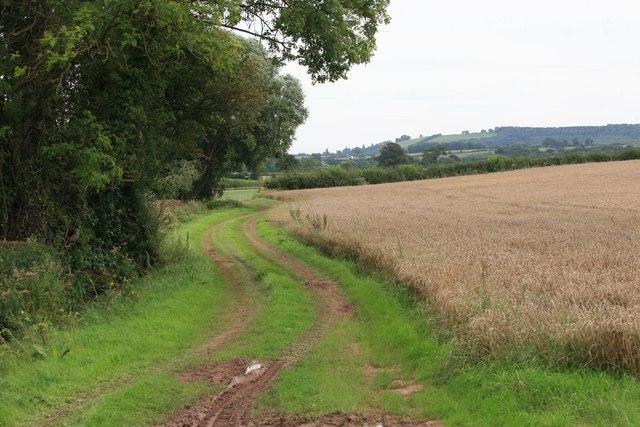Corn Field nr Didley