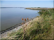 TQ7076 : The Saxon Shore Way near the mouth of Cliffe Creek by Marathon