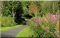 C8530 : Path, Somerset forest, Coleraine (1) by Albert Bridge
