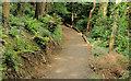 C8430 : Path, Somerset forest, Coleraine (2) by Albert Bridge