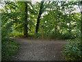 SJ6576 : Marbury Country Park, Big Wood by David Dixon