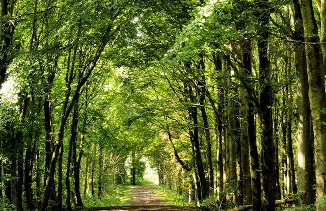 Path Somerset Forest Coleraine 4 169 Albert Bridge Cc By