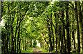 C8430 : Path, Somerset forest, Coleraine (4) by Albert Bridge