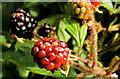 C8430 : Blackberries, Coleraine by Albert Bridge
