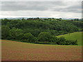 SX9171 : Mill Bottom from Forches Hill by Robin Stott