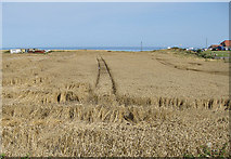 TA0684 : Clifftop crop by Pauline E