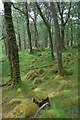 NM8364 : Ariundle Nature Reserve by Mick Garratt