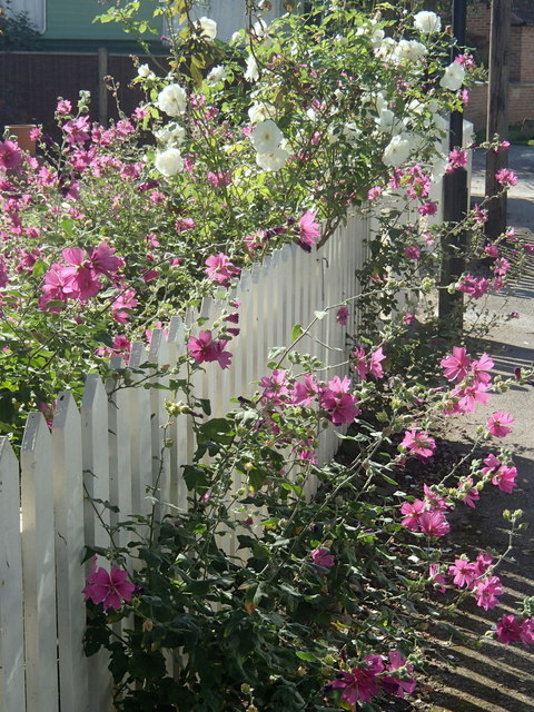 Flowers and fence, Maplebeck