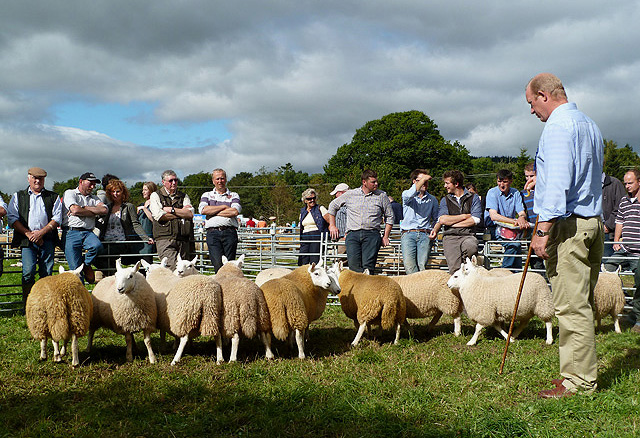 Judging sheep at the Yarrow and Ettrick Agricultural Show