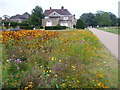 TQ2549 : Wildflower area and Reigate Priory, Priory Park by Marathon