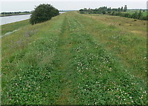 TF3839 : Footpath west along the sea bank by Mat Fascione