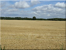 TL1863 : Farmland near the A1 by JThomas