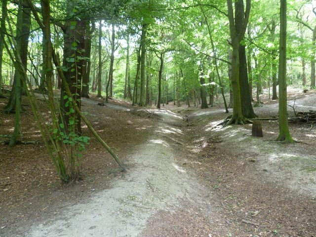 The woods of Croham Hurst