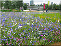 TQ3783 : Flowers near the Greenway Gate exit of the Olympic Park by Nick Smith