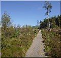 NH5436 : Great Glen Way, near Abriachan by Craig Wallace