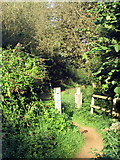 SP7950 : Path into the forest from Forest Road by Philip Jeffrey