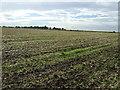 TL1059 : Farmland near Church End by JThomas