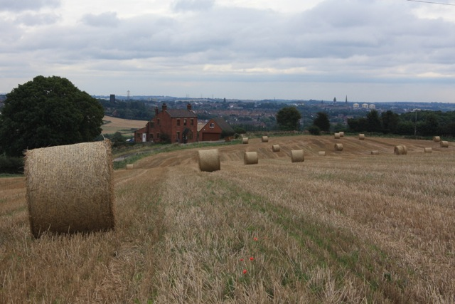 Field after the Harvest at Lodge Hill