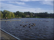 TQ2472 : Wimbledon Park lake by David Howard