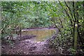 TL9029 : Damp Path in Thornfield Wood by Glyn Baker