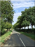 TL1459 : Tree lined road towards St Neots by JThomas