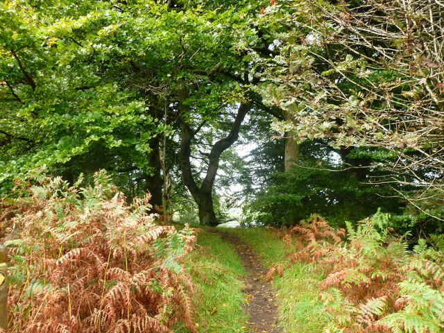 Path in Craigs Wood, Lewis Hill