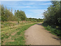 TQ5582 : Path near newly planted coupe in Cely Woods by Roger Jones