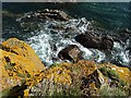NT9562 : Berwickshire coastal rocks by Walter Baxter