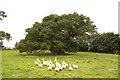 TF0615 : The Bowthorpe Oak by Richard Croft