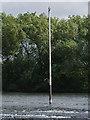 SK7753 : Bird on a pole  by Alan Murray-Rust