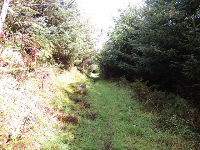 Southern Upland Way in Airyolland Wood