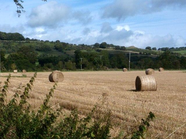 Harvested field adjoining Longreave Lane