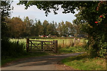 SE6691 : Sleightholme Dale Road approaching Common House by Chris
