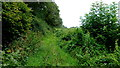 SJ5943 : Overgrown bridleway by Jonathan Billinger